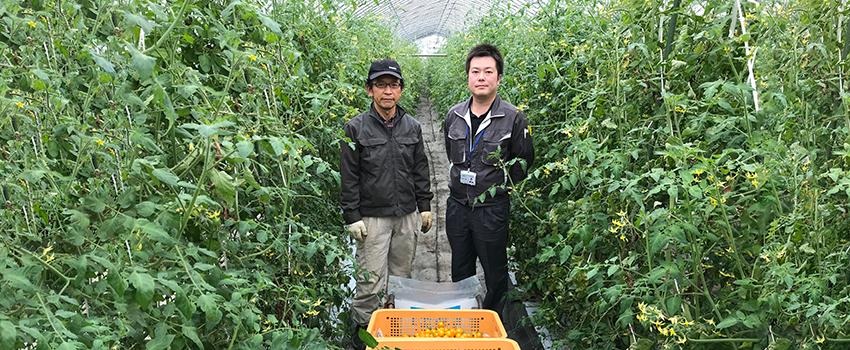 調光を使用しミニトマトの萎れ低減を実感。北海道有珠郡壮瞥町 新藤農園様