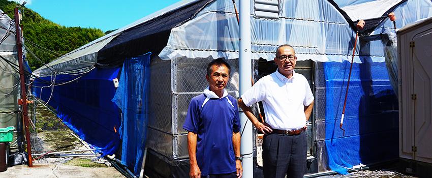 ハウスみょうが栽培に調光効果を実感! 高知県須崎市 土居様