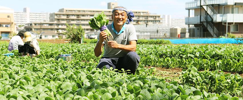 小松菜の生育のばらつきが改善 千葉県船橋市 平野様
