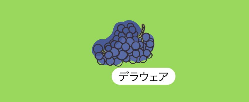 鳥取県出雲デラウェア