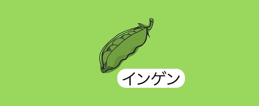 愛知県豊橋市いんげん