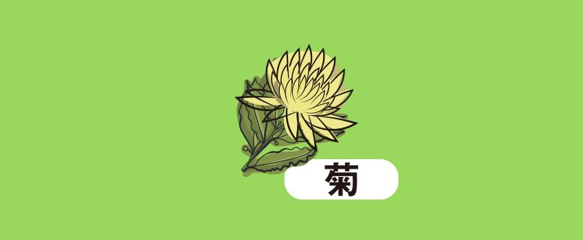 静岡県安城市菊